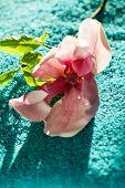 image of magnolia  - Spa concept - JPG