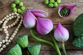 foto of seed  - Collection of lotus pink lotus flower green seed white lotus seed in fresh and dry herbal tea of this flora with amazing abstract concept in vibrant color this food make healthy good sleep - JPG