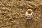 foto of shells  - Sea shell on a coarse - JPG