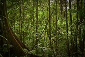 image of rainforest  - Beautiful landscape of dense rainforest nature - JPG