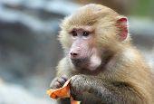 A Cute Monkey Eating