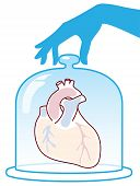 Heart Is Protected By A Bell Jar.