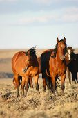 Wild horses vertical_2510