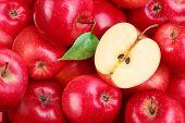 Постер, плакат: Красные яблоки с листьями