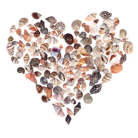 image of heart shape  - a heart made of sea shells isolated on white backbround - JPG