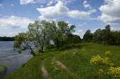 Trees On The Steep Bank Of River Oka In Russia And A Road At Green Meadow And Yellow Flowers In Summ