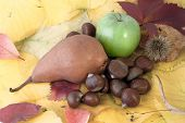 Autumnal Fruit Composition