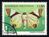 Eulepidotis Rectimargo