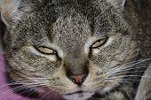 Katze0003