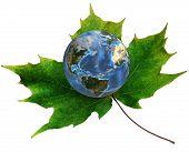 Blauer Planet Erde auf grüne Ahornblatt