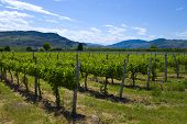 Vineyards And Orchards. Osoyoos, B.c.