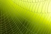 picture of spider web  - Spider web with water drops - JPG