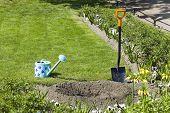 Gardening , planting
