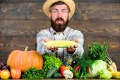 Farmer Hold Corncob Or Maize Wooden Background. Farmer Presenting Organic Homegrown Vegetables. Home poster