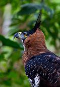 Bird Of Prey Side