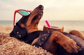 Cute Dog Of Dachshund, Black And Tan, Buried In The Sand At The Beach Sea On Summer Vacation Holiday poster