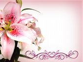 Asian Lily Card Or Invitation Pink
