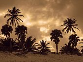 image of greater antilles  - dramatic evening scenery with clouded sky and palm tree silhouettes at the Dominican Republic a island of Hispanola wich is a part of the Greater Antilles archipelago in the Carribean region - JPG