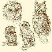 owl - hand drawn set