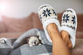 Slippers on womens legs and kitten. Cat near soft comfortable home slipper poster