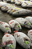 gefrorene Thunfisch