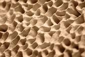 Mushroom Pores