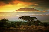 stock photo of grassland  - Mount Kilimanjaro and clouds line at sunset - JPG