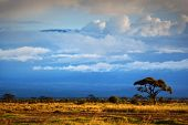 Mount Kilimanjaro partly in clouds, view from savanna landscape in Amboseli, Kenya, Africa