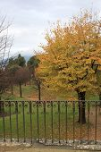 Autumn In Boboli Gardens