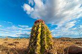 Closeup Cactus View