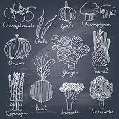 Tasty vegetables in vector set - cherry tomato, chili, garlic, champignon, onion, ginger, fennel, as