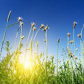 Sun Light In Green Spring Grass