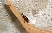 Red bug, thumbtack, climbing on a dead leaf, somewhere in a garden in France
