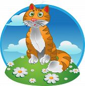 Orange funny sitting cat on color background