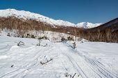 Wild nature of Kamchatka