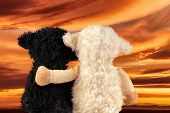 Two Cute Stuffed Animals Enjoy The Sunset