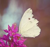 a white butterfly on a purple flower done with a soft instagram like filter