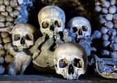 image of eye-sockets  - Human skulls in the basement crypt - JPG
