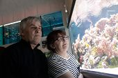 Senior Couple Looking At Fishes