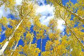 image of peep  - Autumn Foliage - JPG