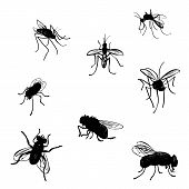 pic of mosquito  - Vector collection of various positioned doodle flies and mosquitoes - JPG
