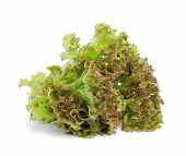 foto of iceberg lettuce  - fresh green lettuce leaves isolated on white - JPG