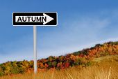 Autumn Road Sign