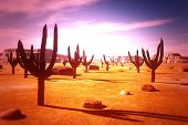 Desert Saguaro Cactus Field 3D artwork