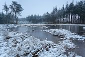 Frozen Lake In Winter Forest