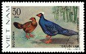Vintage  Postage Stamp. Bird Laphura Edwardsi.