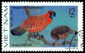 Vintage  Postage Stamp. Bird Tragopan Temminckii.
