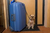 Small Dog And A Large Suitcase