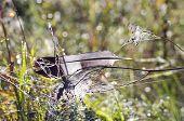 Bird Feather On Dewy Spider-web In Autumn