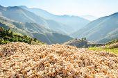 Mountain View Landscape And Corncob Pile